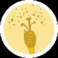 bee-pollen-2.1